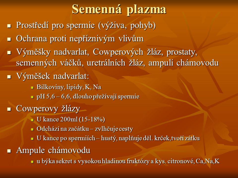 Semenná plazma Prostředí pro spermie (výživa, pohyb) Prostředí pro spermie (výživa, pohyb) Ochrana proti nepříznivým vlivům Ochrana proti nepříznivým