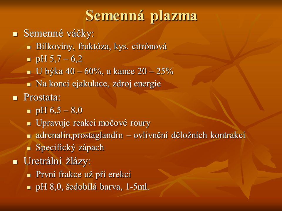 Semenná plazma Semenné váčky: Semenné váčky: Bílkoviny, fruktóza, kys. citrónová Bílkoviny, fruktóza, kys. citrónová pH 5,7 – 6,2 pH 5,7 – 6,2 U býka
