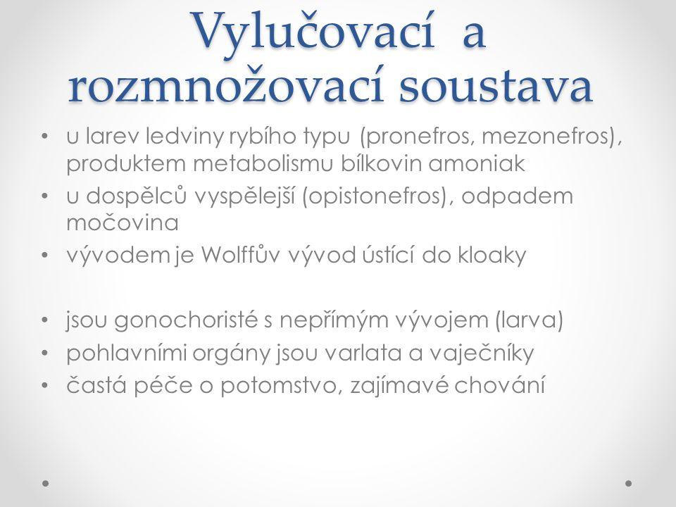 Vylučovací a rozmnožovací soustava u larev ledviny rybího typu (pronefros, mezonefros), produktem metabolismu bílkovin amoniak u dospělců vyspělejší (opistonefros), odpadem močovina vývodem je Wolffův vývod ústící do kloaky jsou gonochoristé s nepřímým vývojem (larva) pohlavními orgány jsou varlata a vaječníky častá péče o potomstvo, zajímavé chování