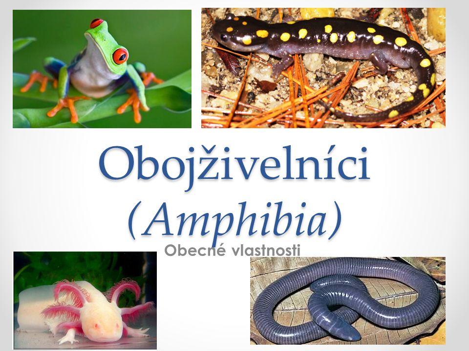 Obojživelníci (Amphibia) Obecné vlastnosti