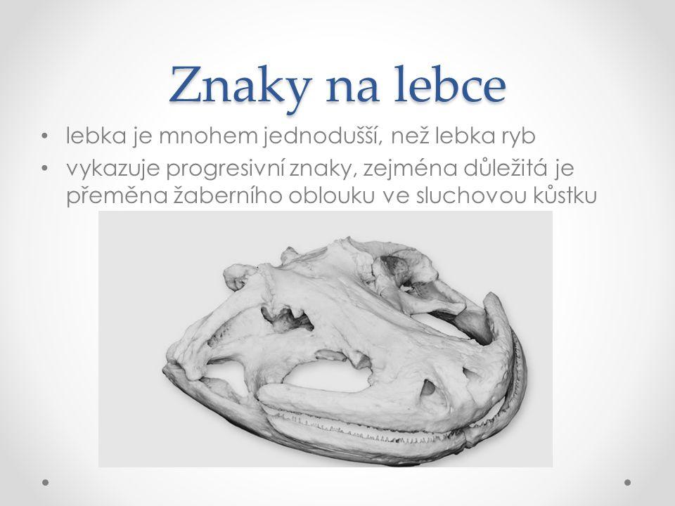 Znaky na lebce lebka je mnohem jednodušší, než lebka ryb vykazuje progresivní znaky, zejména důležitá je přeměna žaberního oblouku ve sluchovou kůstku