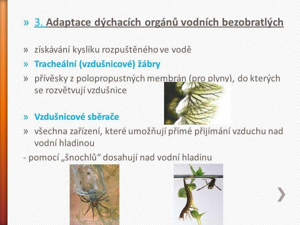 » 3. Adaptace dýchacích orgánů vodních bezobratlých » získávání kyslíku rozpuštěného ve vodě » Tracheální (vzdušnicové) žábry » přívěsky z polopropust