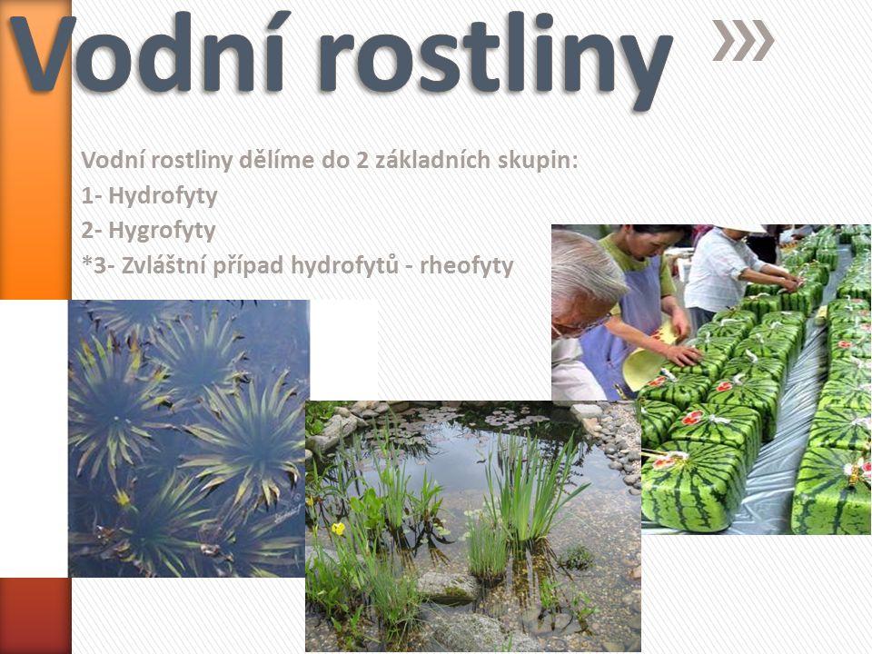 Vodní rostliny dělíme do 2 základních skupin: 1- Hydrofyty 2- Hygrofyty *3- Zvláštní případ hydrofytů - rheofyty