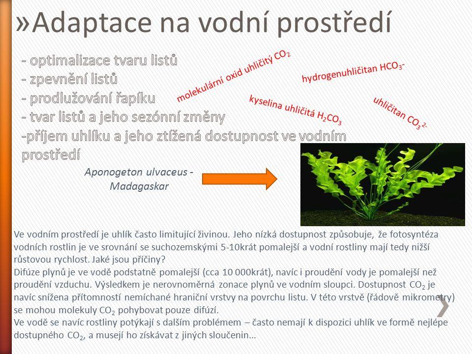 » Adaptace na vodní prostředí Ve vodním prostředí je uhlík často limitující živinou. Jeho nízká dostupnost způsobuje, že fotosyntéza vodních rostlin j