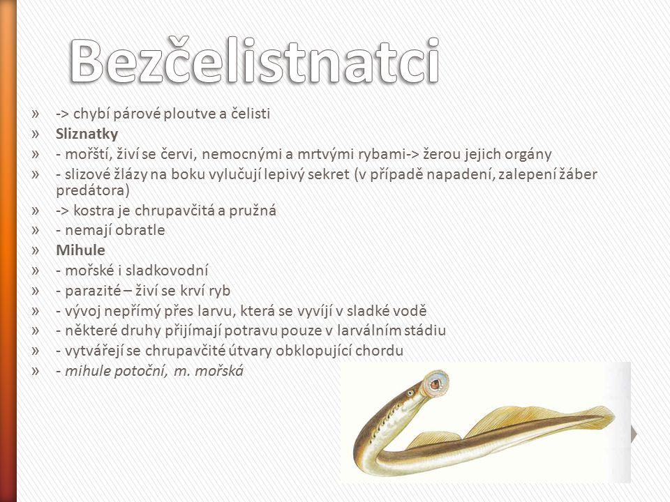 » -> chybí párové ploutve a čelisti » Sliznatky » - mořští, živí se červi, nemocnými a mrtvými rybami-> žerou jejich orgány » - slizové žlázy na boku vylučují lepivý sekret (v případě napadení, zalepení žáber predátora) » -> kostra je chrupavčitá a pružná » - nemají obratle » Mihule » - mořské i sladkovodní » - parazité – živí se krví ryb » - vývoj nepřímý přes larvu, která se vyvíjí v sladké vodě » - některé druhy přijímají potravu pouze v larválním stádiu » - vytvářejí se chrupavčité útvary obklopující chordu » - mihule potoční, m.