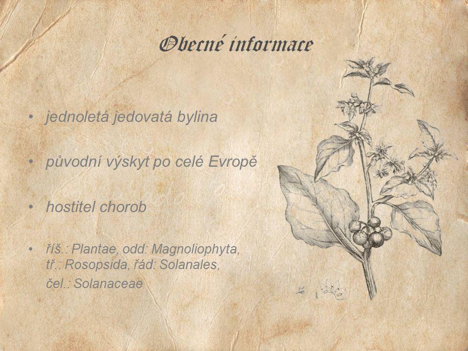 Obecné informace jednoletá jedovatá bylina původní výskyt po celé Evropě hostitel chorob říš.: Plantae, odd: Magnoliophyta, tř.: Rosopsida, řád: Solan