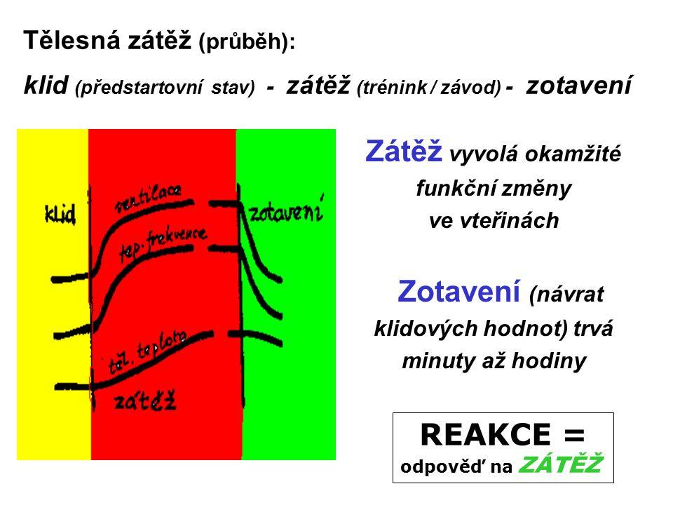 Kontrola - testy Rozcvičení Protáhnout a rozcvičit hlavní svalové skupiny a klouby !!!