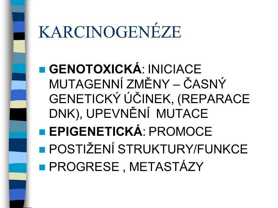 KARCINOGENÉZE GENOTOXICKÁ: INICIACE MUTAGENNÍ ZMĚNY – ČASNÝ GENETICKÝ ÚČINEK, (REPARACE DNK), UPEVNĚNÍ MUTACE EPIGENETICKÁ: PROMOCE POSTIŽENÍ STRUKTURY/FUNKCE PROGRESE, METASTÁZY