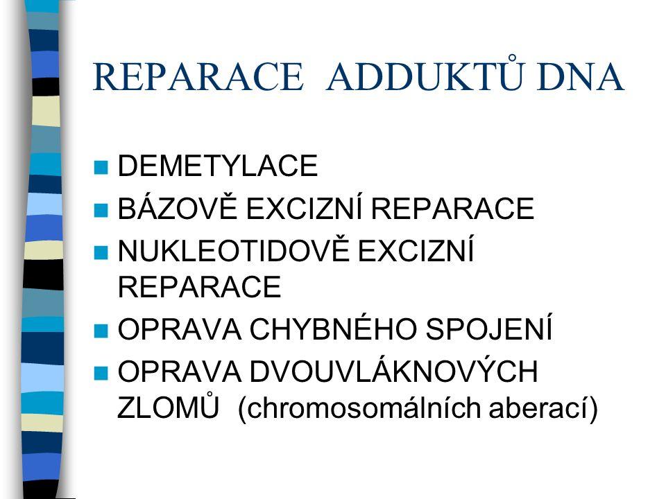 REPARACE ADDUKTŮ DNA DEMETYLACE BÁZOVĚ EXCIZNÍ REPARACE NUKLEOTIDOVĚ EXCIZNÍ REPARACE OPRAVA CHYBNÉHO SPOJENÍ OPRAVA DVOUVLÁKNOVÝCH ZLOMŮ (chromosomálních aberací)