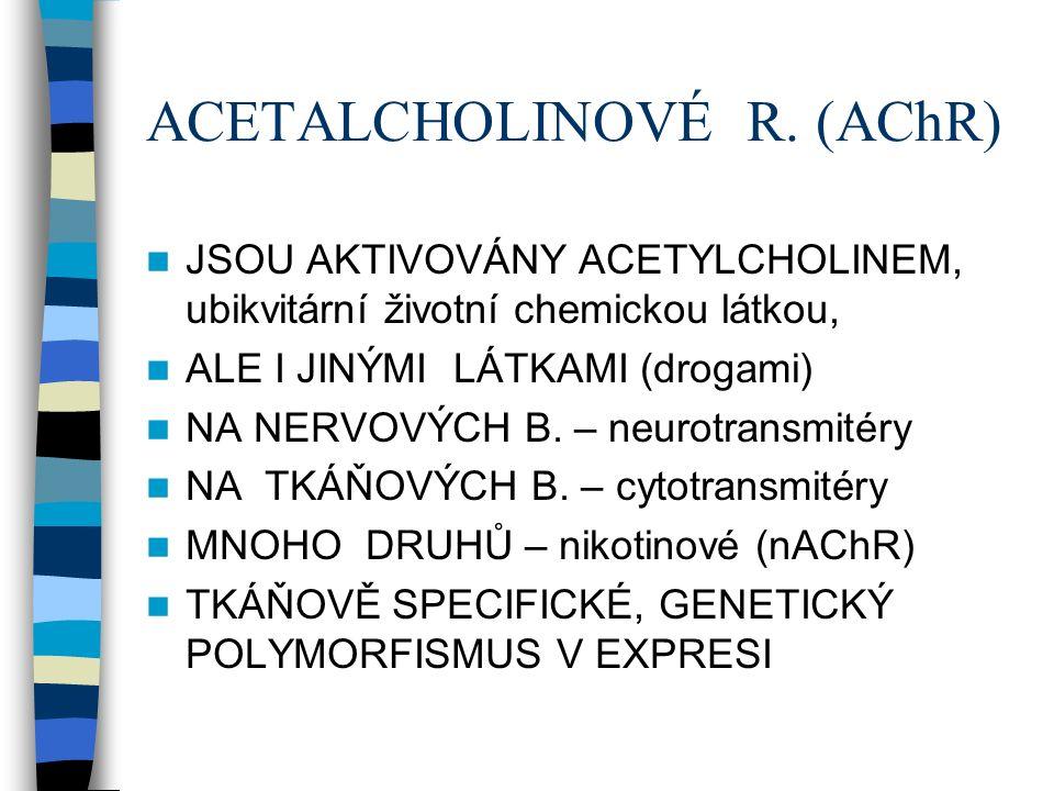 ACETALCHOLINOVÉ R.