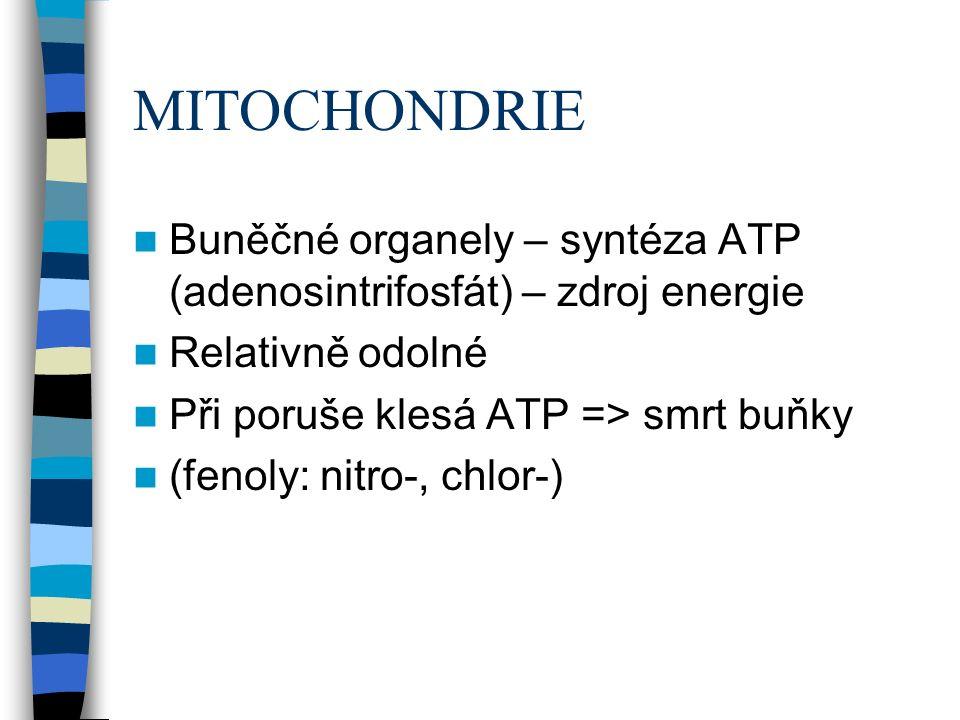 MITOCHONDRIE Buněčné organely – syntéza ATP (adenosintrifosfát) – zdroj energie Relativně odolné Při poruše klesá ATP => smrt buňky (fenoly: nitro-, chlor-)