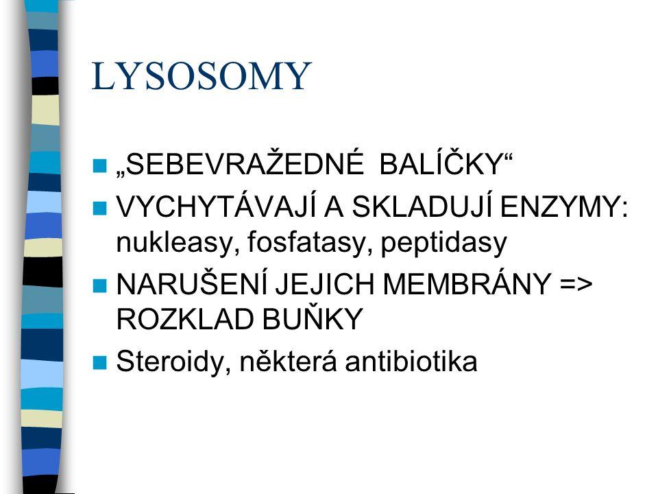 """LYSOSOMY """"SEBEVRAŽEDNÉ BALÍČKY VYCHYTÁVAJÍ A SKLADUJÍ ENZYMY: nukleasy, fosfatasy, peptidasy NARUŠENÍ JEJICH MEMBRÁNY => ROZKLAD BUŇKY Steroidy, některá antibiotika"""