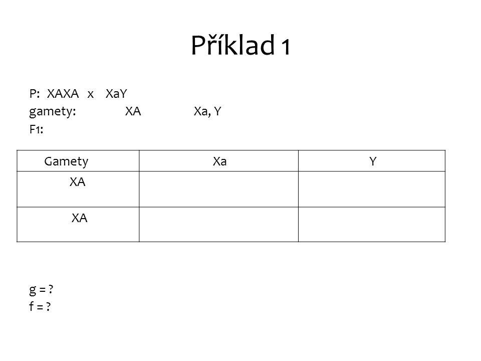 Příklad 1 P: XAXA x XaY gamety: XA Xa, Y F1: g = ? f = ? Gamety Xa Y XA