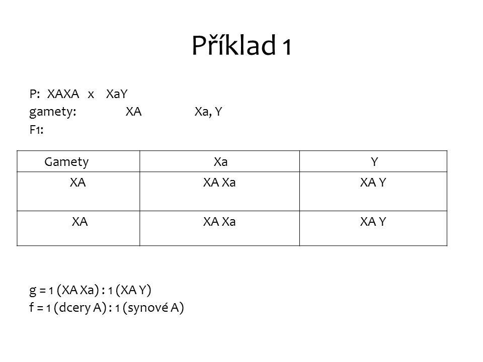 Příklad 1 P: XAXA x XaY gamety: XA Xa, Y F1: g = 1 (XA Xa) : 1 (XA Y) f = 1 (dcery A) : 1 (synové A) Gamety Xa Y XAXA XaXA Y XAXA XaXA Y