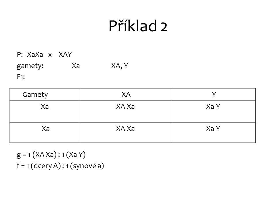 Příklad 2 P: XaXa x XAY gamety: Xa XA, Y F1: g = 1 (XA Xa) : 1 (Xa Y) f = 1 (dcery A) : 1 (synové a) Gamety XA XA Y XaXaXA XaXa Y Xa XaXA XaXa Y
