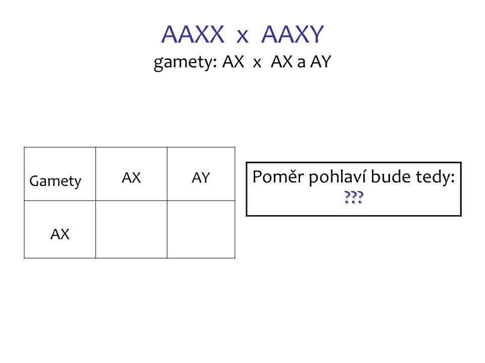 AAXX x AAXY gamety: AX x AX a AY Gamety AX AY AX AAXXAAXY 1:1 Poměr pohlaví bude tedy: 1:1