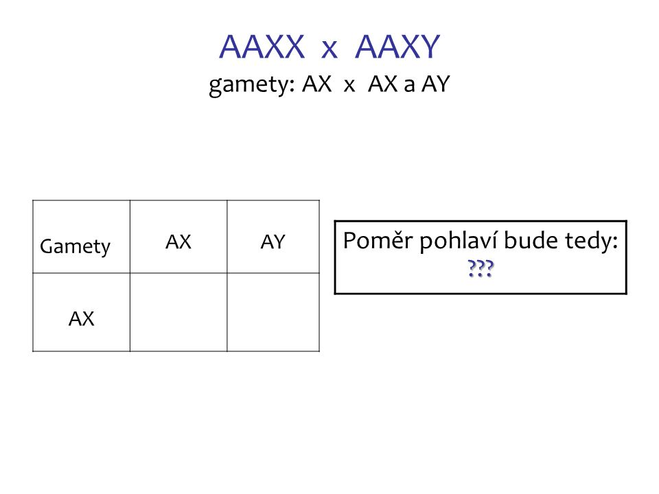 AAXX x AAXY gamety: AX x AX a AY Gamety AX AY AX ??? Poměr pohlaví bude tedy: ???