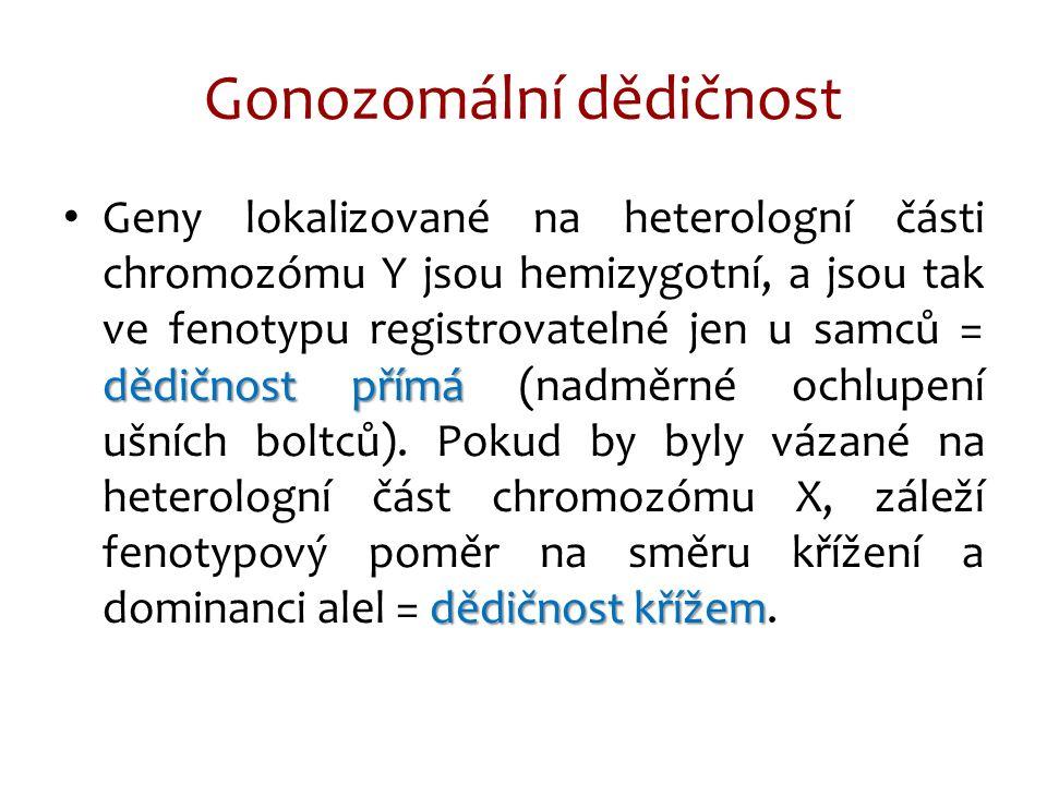 Gonozomální dědičnost dědičnost přímá dědičnost křížem Geny lokalizované na heterologní části chromozómu Y jsou hemizygotní, a jsou tak ve fenotypu re