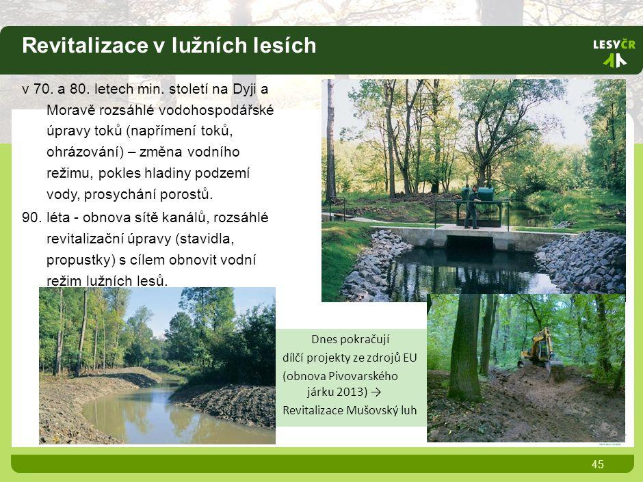 Revitalizace v lužních lesích 45 v 70. a 80. letech min.