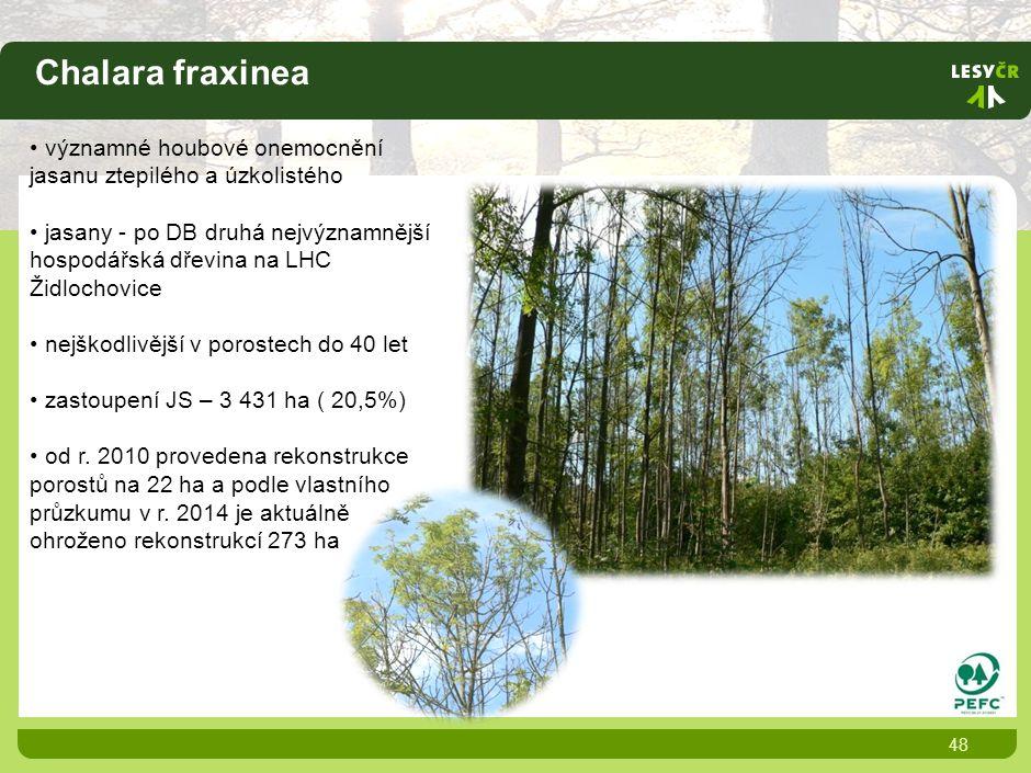 Chalara fraxinea 48 významné houbové onemocnění jasanu ztepilého a úzkolistého jasany - po DB druhá nejvýznamnější hospodářská dřevina na LHC Židlochovice nejškodlivější v porostech do 40 let zastoupení JS – 3 431 ha ( 20,5%) od r.