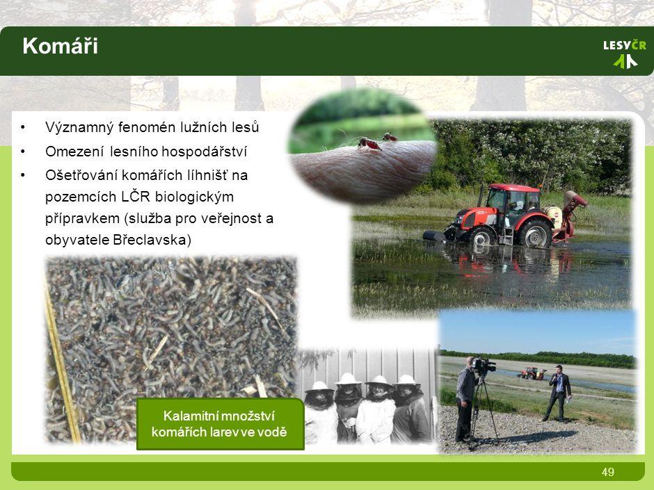 Komáři 49 Významný fenomén lužních lesů Omezení lesního hospodářství Ošetřování komářích líhnišť na pozemcích LČR biologickým přípravkem (služba pro veřejnost a obyvatele Břeclavska) Kalamitní množství komářích larev ve vodě