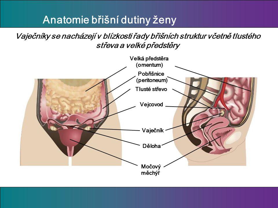 Anatomie břišní dutiny ženy Děloha Močový měchý ř Vaječník Vejcovod Velká předstěra (omentum) Tlusté střevo Vaječníky se nacházejí v blízkosti řady břišních struktur včetně tlustého střeva a velké předstěry Pobřišnice (peritoneum)