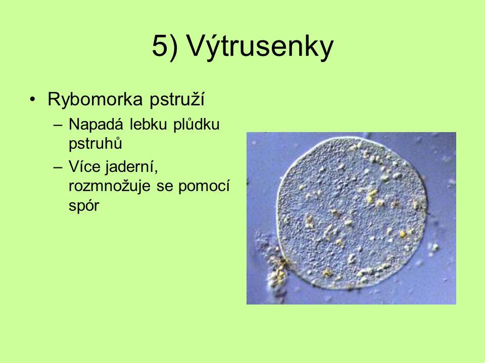 5) Výtrusenky Rybomorka pstruží –Napadá lebku plůdku pstruhů –Více jaderní, rozmnožuje se pomocí spór