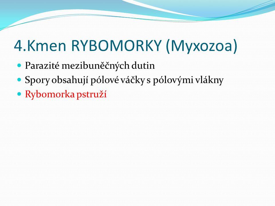4.Kmen RYBOMORKY (Myxozoa) Parazité mezibuněčných dutin Spory obsahují pólové váčky s pólovými vlákny Rybomorka pstruží
