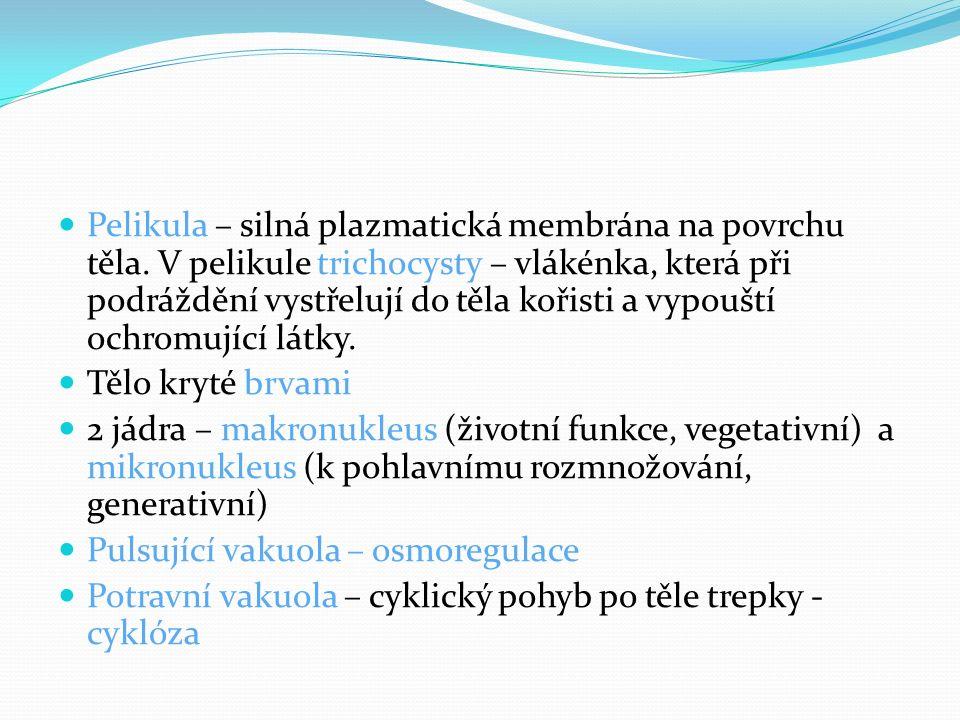 Pelikula – silná plazmatická membrána na povrchu těla.