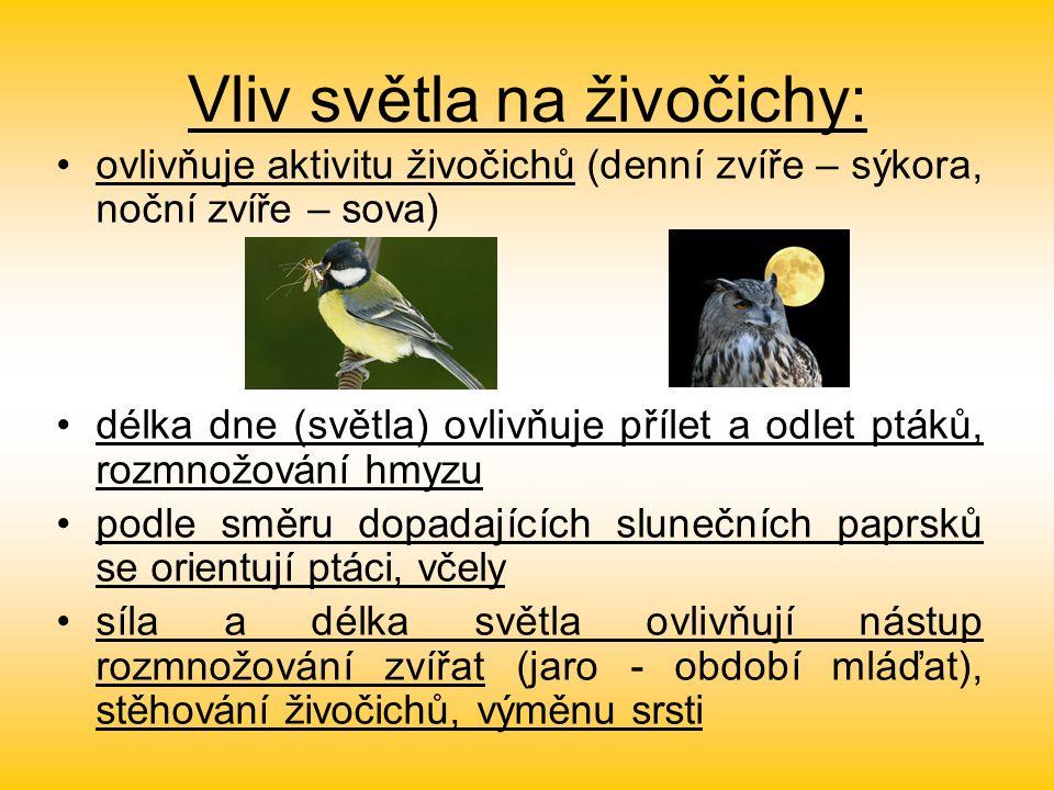 Vliv světla na živočichy: ovlivňuje aktivitu živočichů (denní zvíře – sýkora, noční zvíře – sova) délka dne (světla) ovlivňuje přílet a odlet ptáků, rozmnožování hmyzu podle směru dopadajících slunečních paprsků se orientují ptáci, včely síla a délka světla ovlivňují nástup rozmnožování zvířat (jaro - období mláďat), stěhování živočichů, výměnu srsti