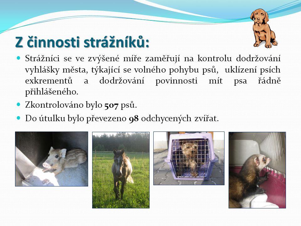 Z činnosti strážníků: Strážníci se ve zvýšené míře zaměřují na kontrolu dodržování vyhlášky města, týkající se volného pohybu psů, uklízení psích exkrementů a dodržování povinnosti mít psa řádně přihlášeného.