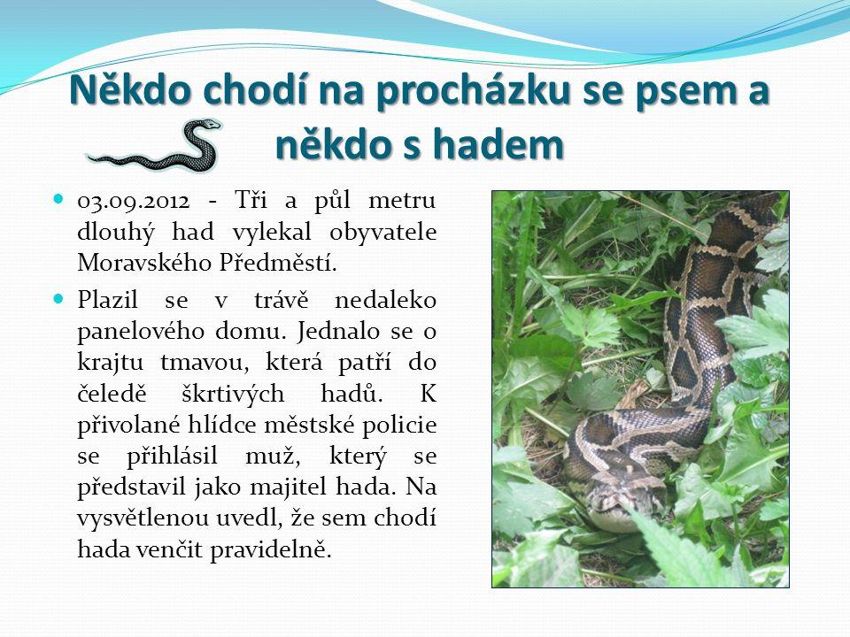 Někdo chodí na procházku se psem a někdo s hadem 03.09.2012 - Tři a půl metru dlouhý had vylekal obyvatele Moravského Předměstí.