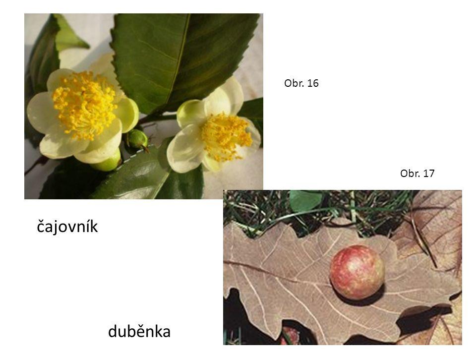 Obr. 16 Obr. 17 čajovník duběnka