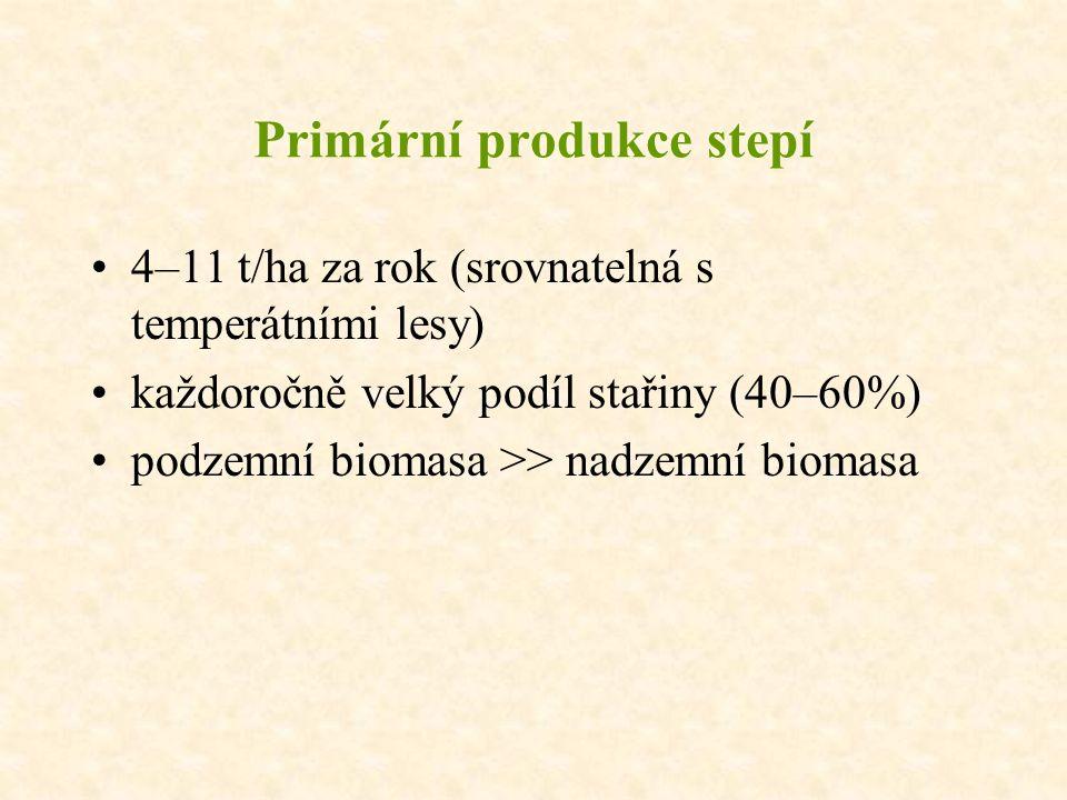Primární produkce stepí 4–11 t/ha za rok (srovnatelná s temperátními lesy) každoročně velký podíl stařiny (40–60%) podzemní biomasa >> nadzemní biomasa