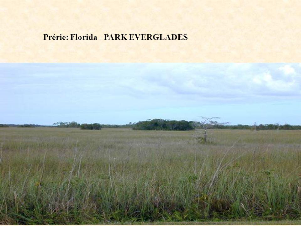 Prérie: Florida - PARK EVERGLADES