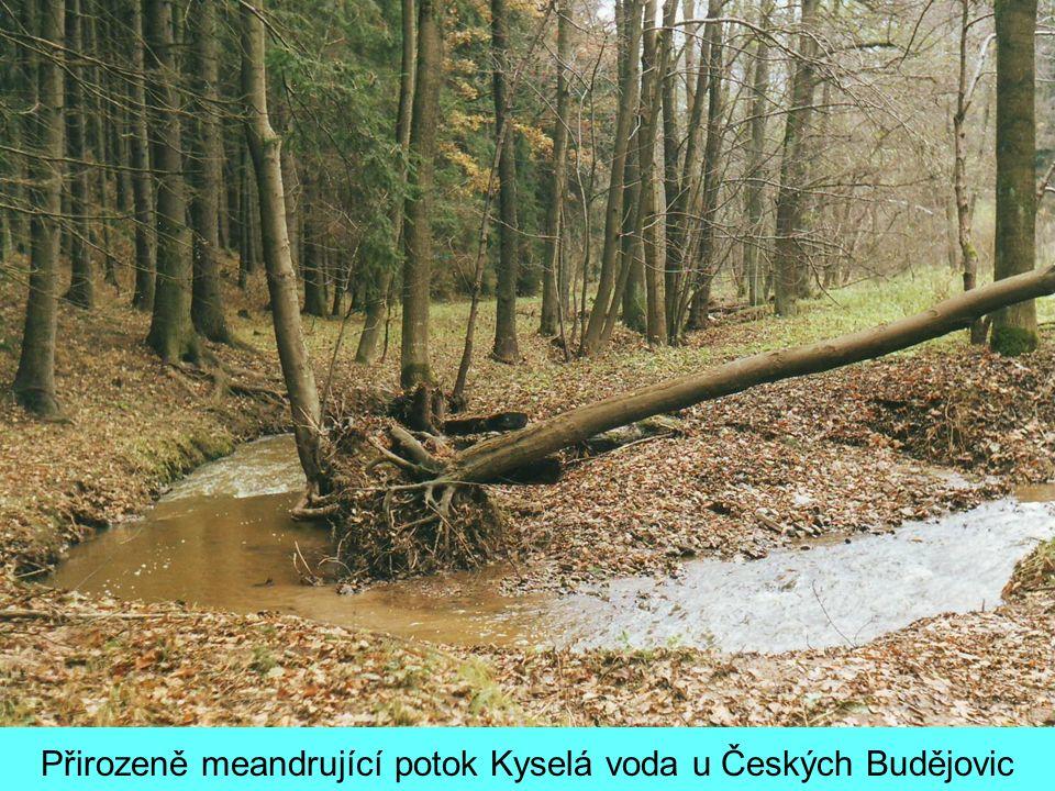 Přirozeně meandrující potok Kyselá voda u Českých Budějovic