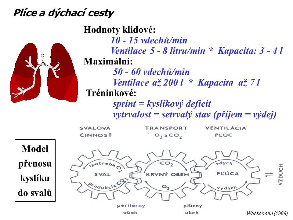 Plíce a dýchací cesty Hodnoty klidové: 10 - 15 vdechů/min Ventilace 5 - 8 litru/min * Kapacita: 3 - 4 l Maximální: 50 - 60 vdechů/min Ventilace až 200 l * Kapacita až 7 l Tréninkové: sprint = kyslíkový deficit vytrvalost = setrvalý stav (příjem = výdej) Wasserman (1999) Model přenosu kyslíku do svalů