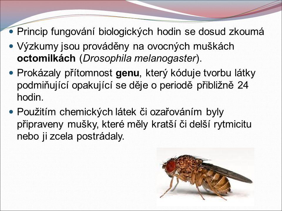 Princip fungování biologických hodin se dosud zkoumá Výzkumy jsou prováděny na ovocných muškách octomilkách (Drosophila melanogaster).