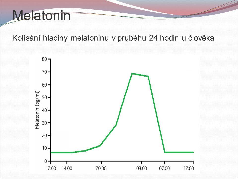 Melatonin Kolísání hladiny melatoninu v průběhu 24 hodin u člověka