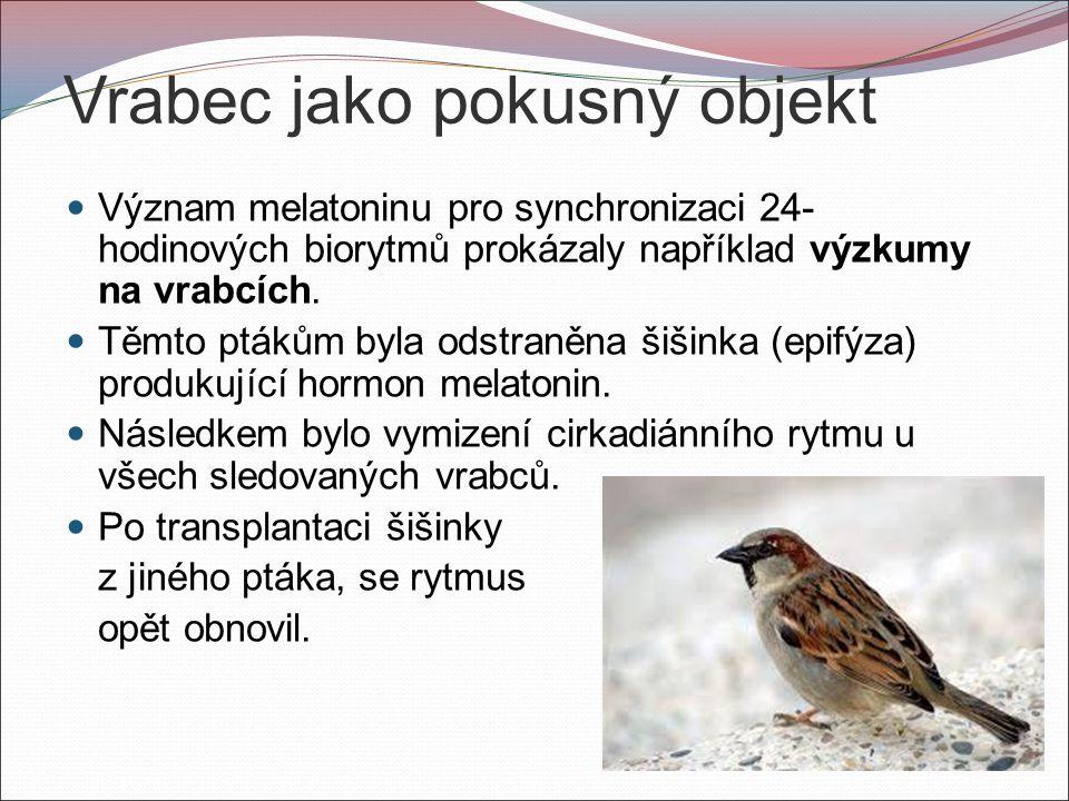 Vrabec jako pokusný objekt Význam melatoninu pro synchronizaci 24- hodinových biorytmů prokázaly například výzkumy na vrabcích.