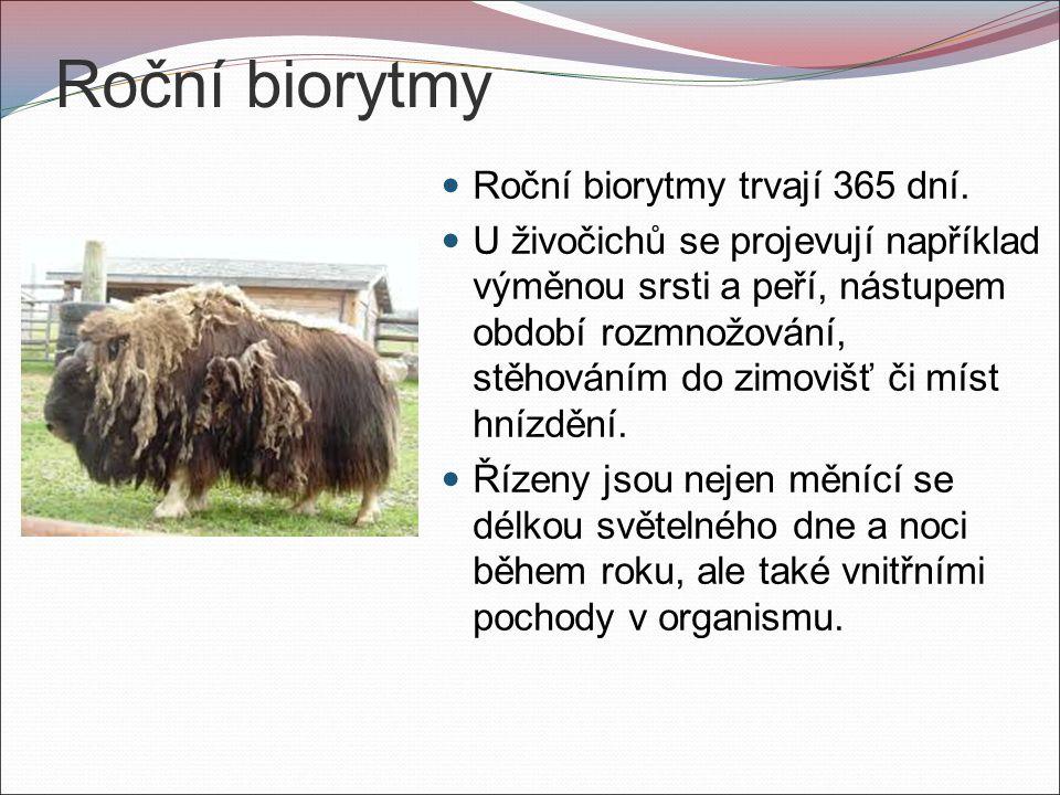 Roční biorytmy Roční biorytmy trvají 365 dní.