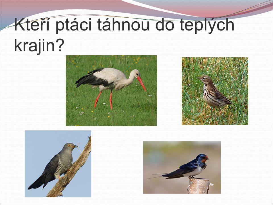 Kteří ptáci táhnou do teplých krajin