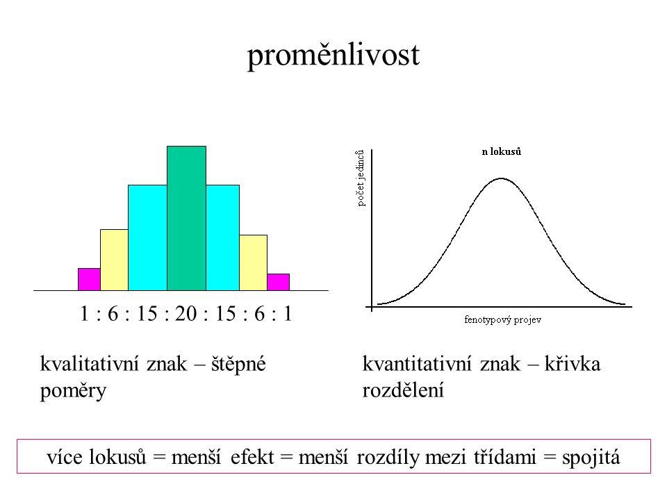 1 : 6 : 15 : 20 : 15 : 6 : 1 kvalitativní znak – štěpné poměry proměnlivost kvantitativní znak – křivka rozdělení více lokusů = menší efekt = menší rozdíly mezi třídami = spojitá