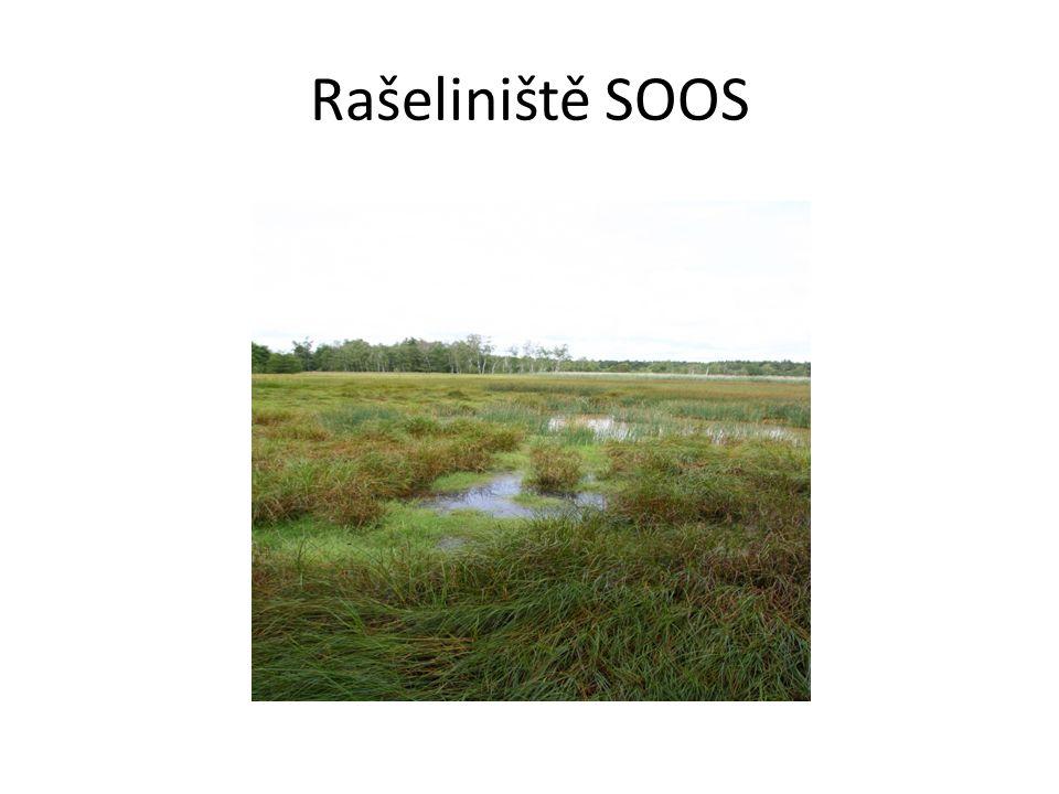 Rašeliniště SOOS