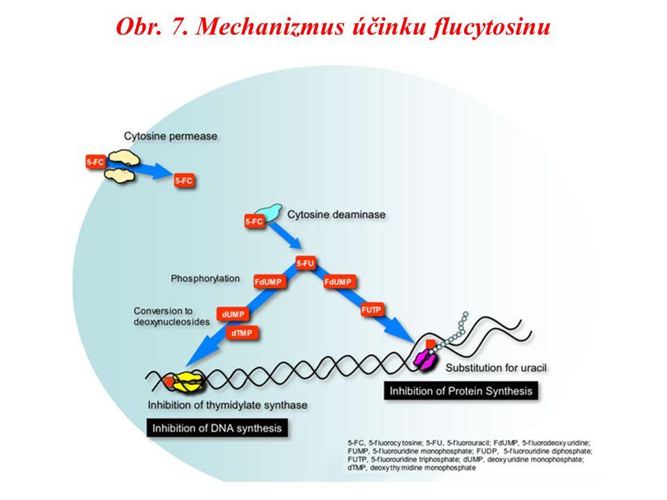 Obr. 7. Mechanizmus účinku flucytosinu