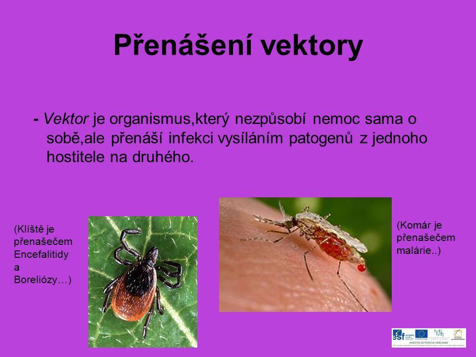 Přenášení vektory - Vektor je organismus,který nezpůsobí nemoc sama o sobě,ale přenáší infekci vysíláním patogenů z jednoho hostitele na druhého.