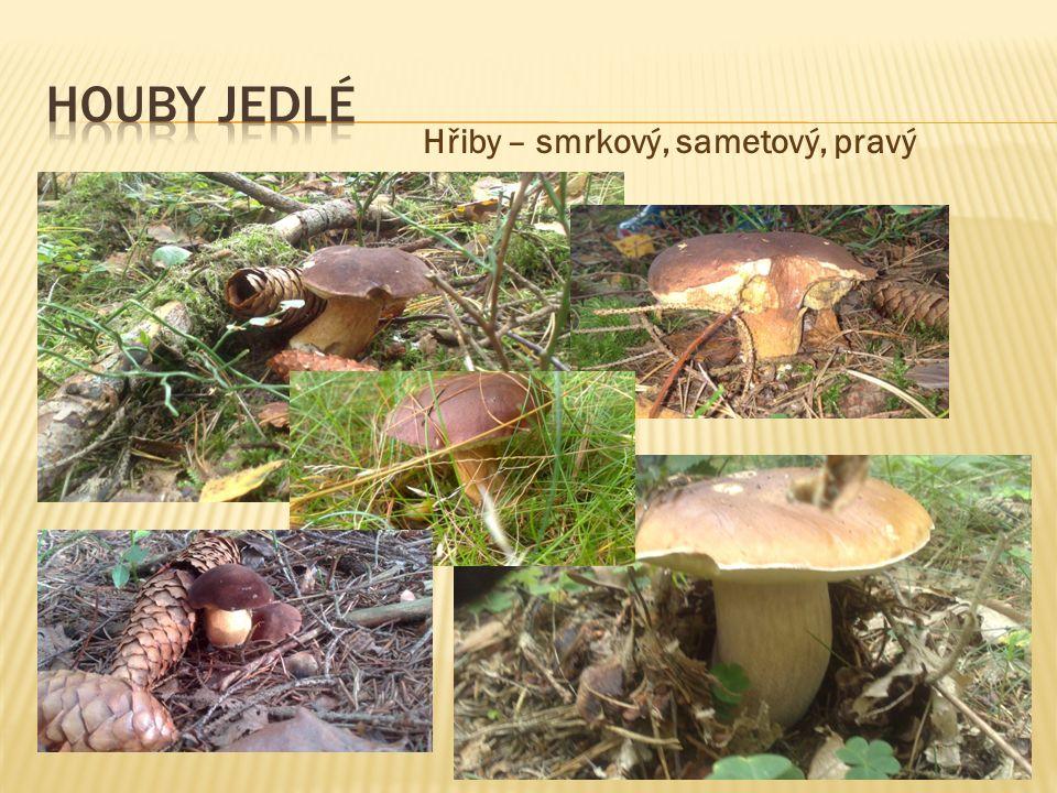  V čem se liší houby od rostlin. Jak jsou užitečné plísně a čím škodí.
