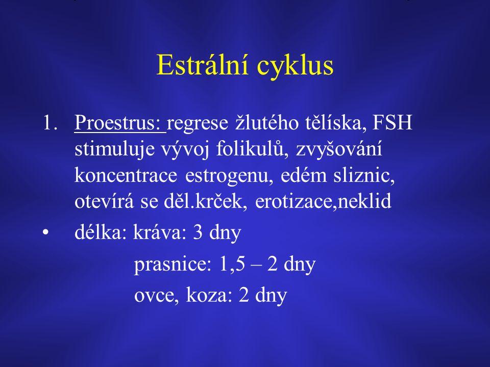 Estrální cyklus 1.Proestrus: regrese žlutého tělíska, FSH stimuluje vývoj folikulů, zvyšování koncentrace estrogenu, edém sliznic, otevírá se děl.krček, erotizace,neklid délka: kráva: 3 dny prasnice: 1,5 – 2 dny ovce, koza: 2 dny