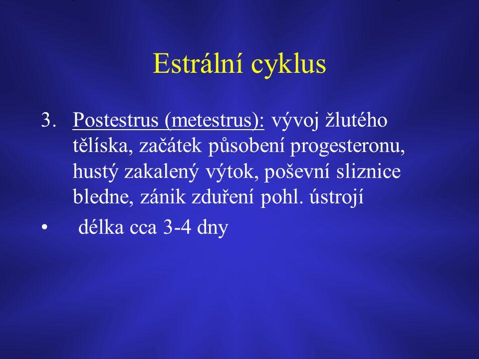 Estrální cyklus 3.Postestrus (metestrus): vývoj žlutého tělíska, začátek působení progesteronu, hustý zakalený výtok, poševní sliznice bledne, zánik zduření pohl.