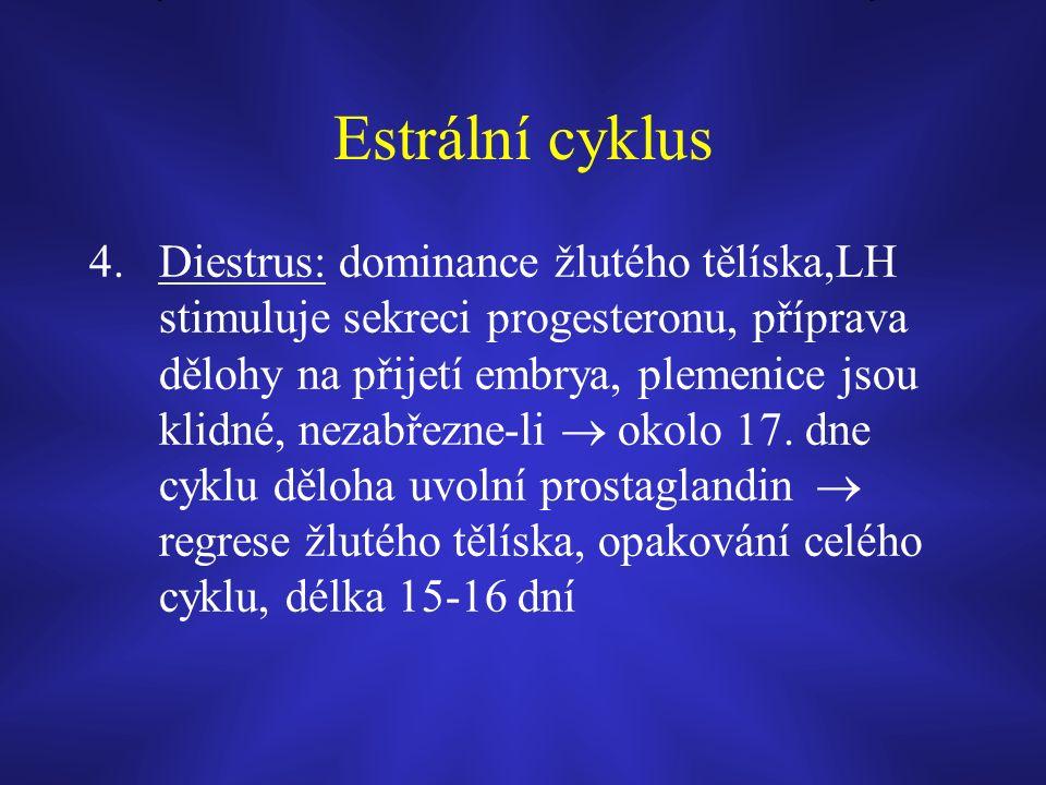 Estrální cyklus 4.Diestrus: dominance žlutého tělíska,LH stimuluje sekreci progesteronu, příprava dělohy na přijetí embrya, plemenice jsou klidné, nezabřezne-li  okolo 17.